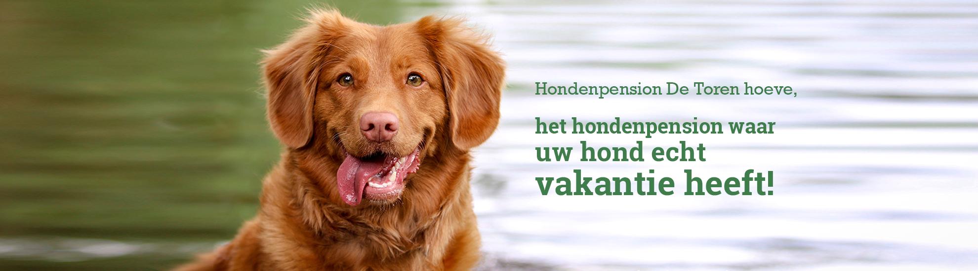 Hondenpension De Toren hoeve, waar uw hond echt vakantie heeft